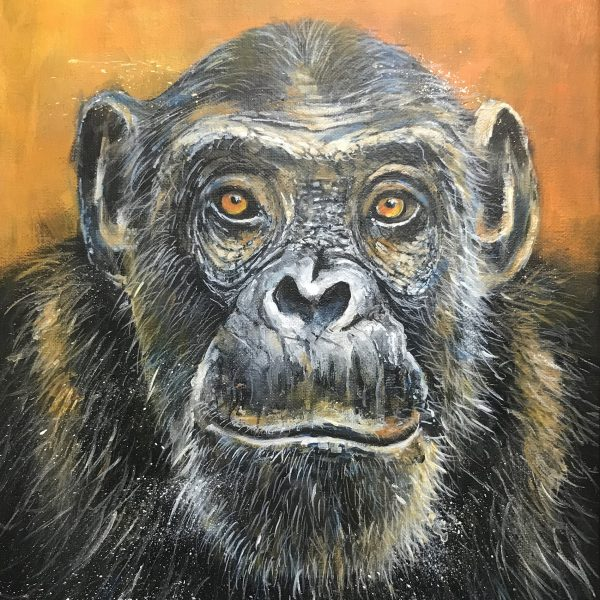 Young Chimpanzee - Ewen Macaulay