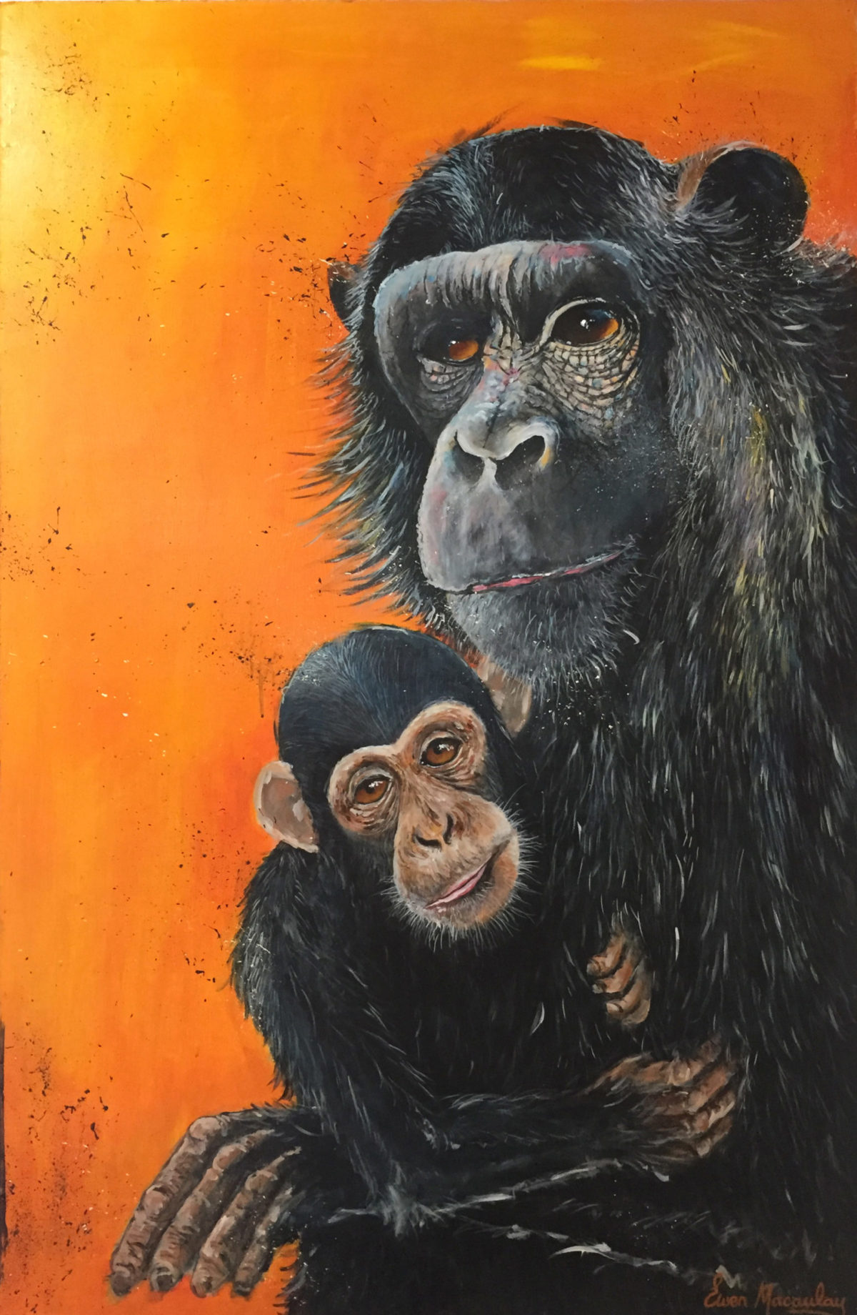 Ewen Macaulay Chimpanzees